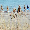 WARREN DILLAWAY / Star Beacon<br /> VEGETATION BLOWS in the wind along the beach at Geneva State Park on Thursday morning.