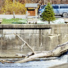 WARREN DILLAWAY / Star Beacon<br /> A FISHERMAN is dwarfed by a large tree at Harpersfield Dam on Thursday afternoon.