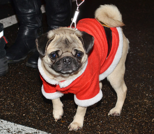 WARREN DILLAWAY / Star Beacon<br /> ANNABELLE GOT all dressed up for the Ashtabula Christmas parade.