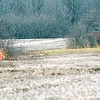 WARREN DILLAWAY / Star Beacon<br /> HUNTERS WORK land along Route 7 in Monroe Township Monday afternoon.