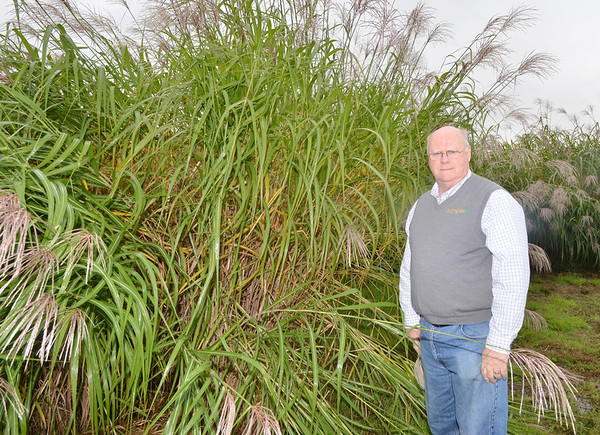 WARREN DILLAWAY / Star Beacon<br /> JON GRISWOLD, chief executive officer of Aloterra Energy in Monroe Township, displays miscanthus grass that will be used in a variety of products to be sold throughout the country.