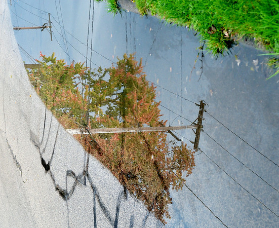 WARREN DILLAWAY / Star Beacon<br /> A PUDDLE reflects fall foliage in a puddle along Harbor Street in Conneaut on Thursday.