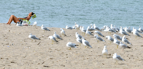 WARREN DILLAWAY / Star Beacon<br /> SEAGULLS SHARE Geneva State Park beach with a lone sunbather on Thursday afternoon.