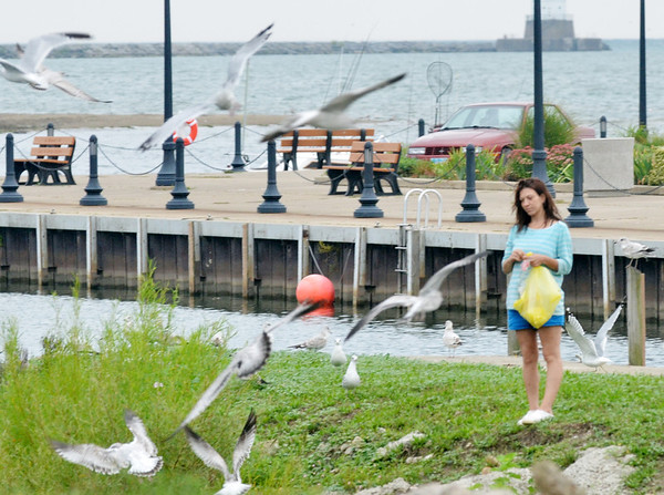 WARREN DILLAWAY / Star Beacon<br /> SEAGULLS LOOK for a meal at the Conneaut public boat docks on Monday.