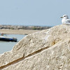 WARREN DILLAWAY / Star Beacon<br /> A SEAGULL suns on a rock as a boat navigates Conneaut Harbor on Thursday.