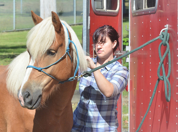 WARREN DILLAWAY / Star Beacon<br /> BRITTNEY SANFILIPO of Andover grooms her horse Folson prior to ride at Indian Trails Park in Ashtabula.
