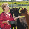 WARREN DILLAWAY / Star Beacon<br /> GLENDA LOWE feeds her alpacas on Saturday prior to an Alpaca Day at her Ramblin Rose Alpaca Farm on Root Road in Monroe Township. The event will continue with tours of the farm today in the 6300 block of Root Road.