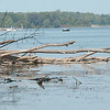 WARREN DILLAWAY / Star Beacon<br /> FALLEN TREES line Pymatuning Lake as a boater navigates the water Friday afternoon.