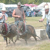 WARREN DILLAWAY / Star Beacon<br /> AN AMISH team competes in the miniature horse pulling competition Saturday at the Pioneer Picnic in Pierpont Township.