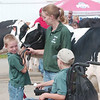 WARREN DILLAWAY / Star Beacon<br /> AMY WYATT and her children Alex, 8, (left) and Noah, 10, of VanWert care for relatives cows at The Great Geauga County Fair in Burton Township Saturday.