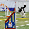 0618 dog events 2