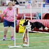 0618 dog events 1