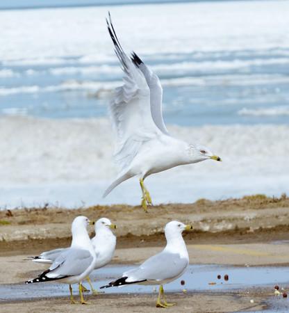 0223 seagull flies
