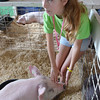 0814 market animal 1
