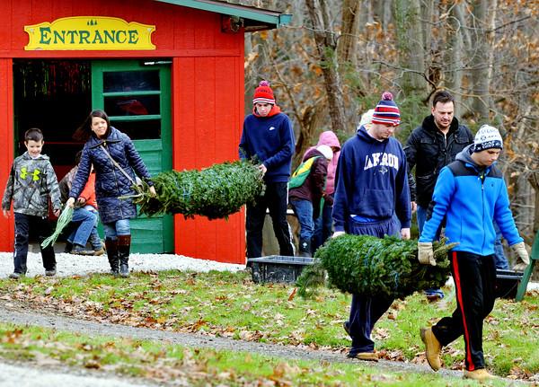 1127 christmas trees 2