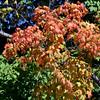 1008 fall foliage 3