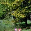 1008 fall foliage 5