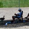 0713 shady geese