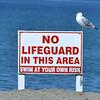 0920 seagull lifeguard