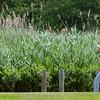 0706 grass walkers