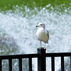 0902 sea gull