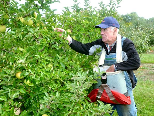 1004 focus apples 3