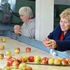 1004 focus apples 4