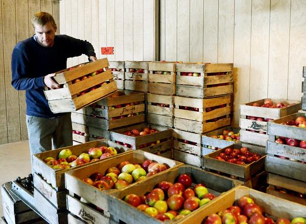 1004 focus apples 9