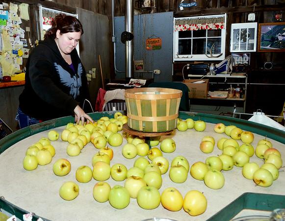 1004 focus apples 1