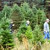 1129 christmas trees 2