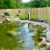 0712 wish pond 2