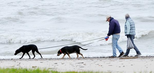 1031 dog walkers
