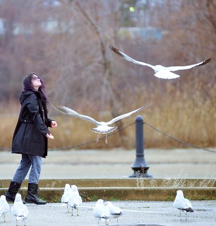 1222 seagull feeding