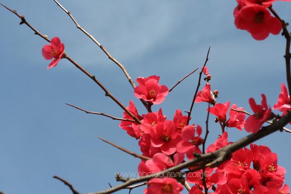 Spring colour. Melbourne, Australia