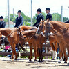 WARREN DILLAWAY / Star Beacon<br /> PARTICIPANTS IN the Runnin' Free & Silver Stir-Ups 44th Annual Open Horse and Pony Show compete on Friday at the Ashtabula County Fairgrounds.