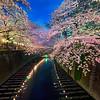 Meguro River – Tokyo, Japan