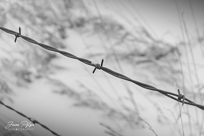 Close-up of a piece of barbed wire with hints of frost hanging on. Enjoy and hold hands.