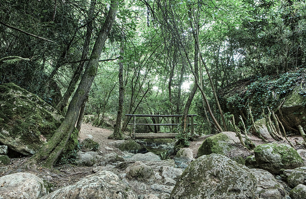 Wooden Bridge, Riera de Martinet, Aiguafreda (Catalonia)