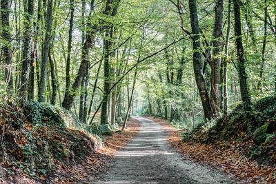 Walking the Path (Fageda d'en Jordà, Catalonia)