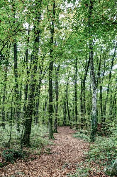 Path Between Trees (Fageda d'en Jordà, Catalonia)
