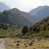 walking in shamsi canyon