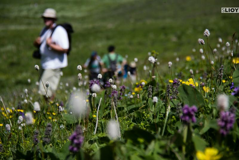 wildflowers in kyrgyzstan