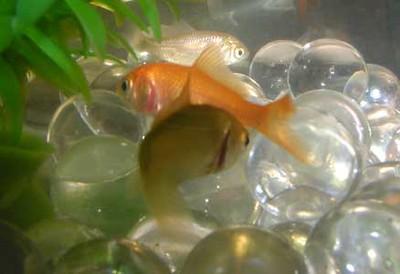 03 02-22 EWI fishies