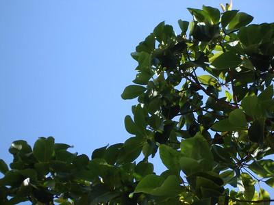 07_03-14_tree