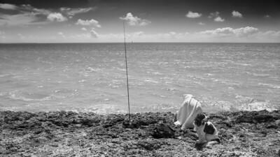 Fishing incognito