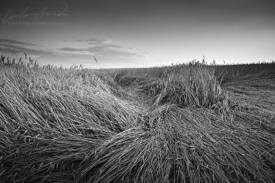 wheat fields, turiec, slovakia