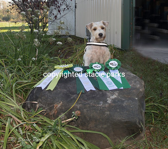 Earth dog Award for Sweetie
