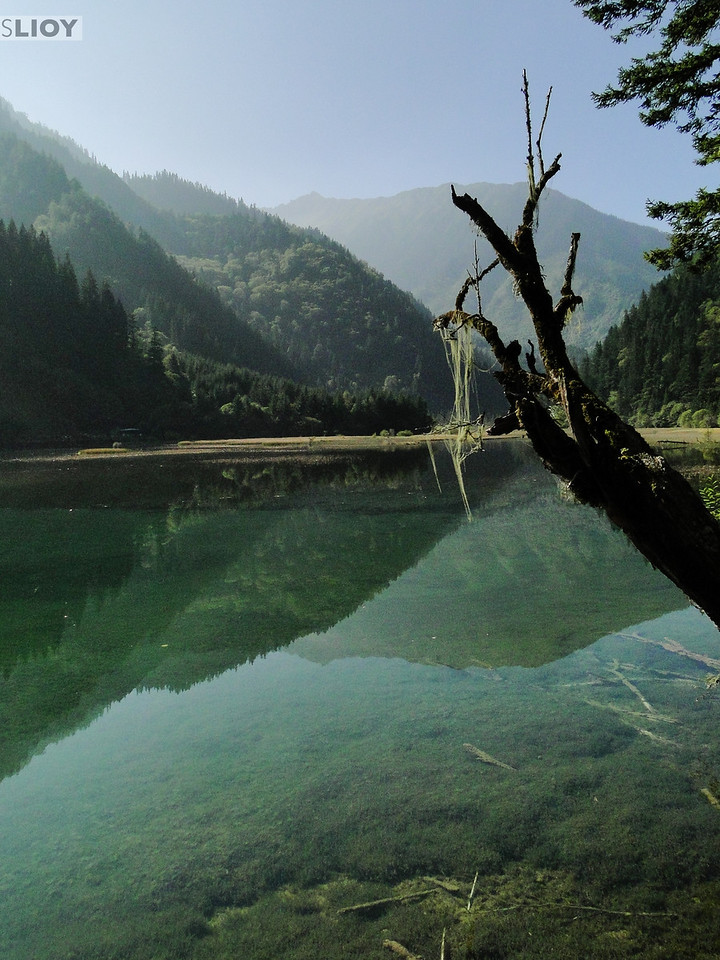 Tree branch overhanging a lake in Jiuzhaigou National Park in Sichuan, China.