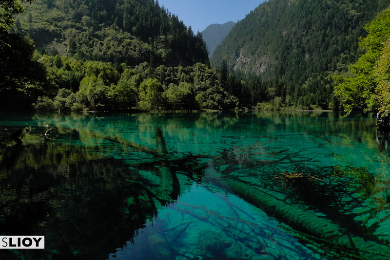 Clear water and dead trees in a lake at China's Jiuzhaigou National Park in Sichuan Province.