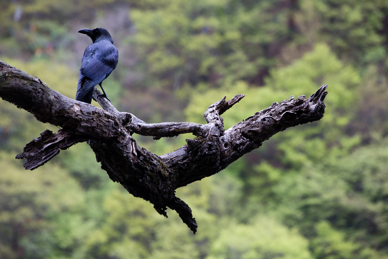 Wildlife in Jiuzhaigou National Park in Sichuan, China.